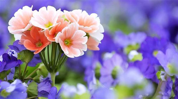 flower-nature-wallpaper-dowload